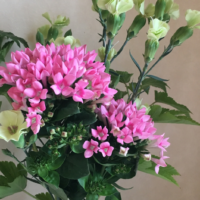 花 スプレーカーネーション ブバリア