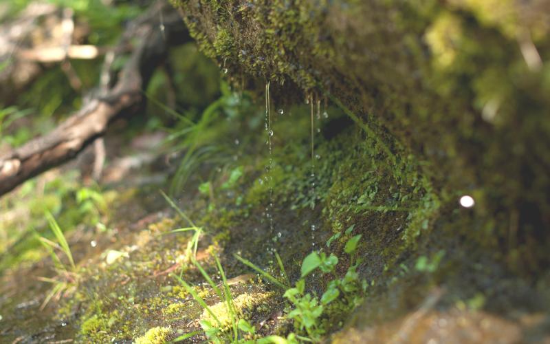 Rock Water 岩清水 フラワーエッセンス
