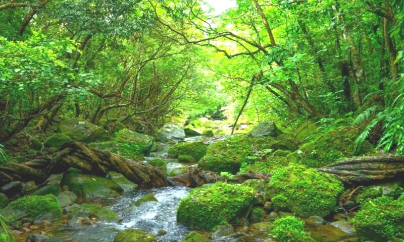 自然の中 森