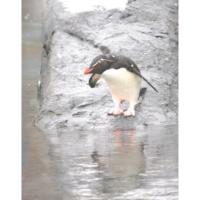 ペンギン 躊躇