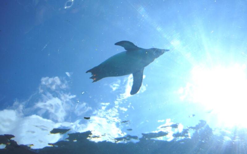 青空 ペンギン
