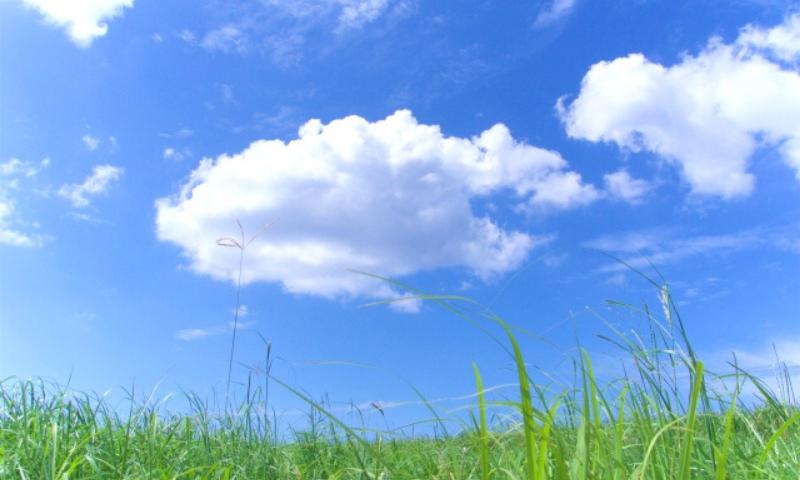 大地 さとうきび畑
